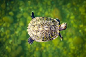 Photo of a Brown turtle