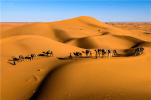 Camels on desert under blue sky
