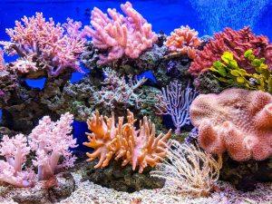Photo of live corals