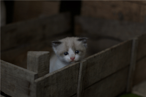 A white and gray kitten on brown wooden crate