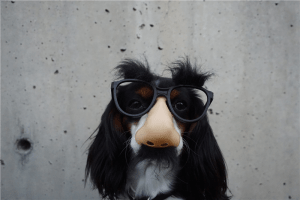 black and white dog with disguise eyeglasses photo Funny Wallpapers black and white dog with disguise eyeglasses photo scaled Resized 300x200