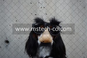 black and white dog with disguise eyeglasses photo