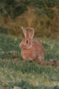 brown hare on grass field photo brown hare on grass field photo scaled Resized 200x300 Home brown hare on grass field photo scaled Resized 200x300