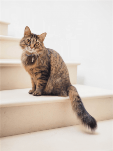 brown tabby cat on white stairs photo