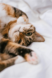 brown tabby cat on white textile photo