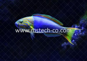 close-up photo of blue and green fish photo