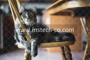 kari-shea-eMzblc6JmXM-unsplashbrown tabby cat on wooden windsor chair photo
