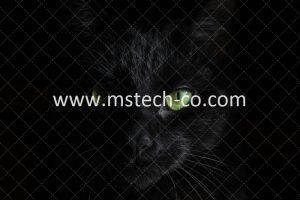 macro photography of black cat photo