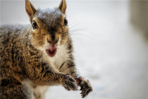macro photography of brown and gray squirrel photo