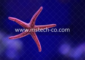 macro shot photography of starfish photo