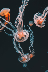 mathilda-khoo-J_REyyXY14s-unsplashpink jellyfishes underwater photo