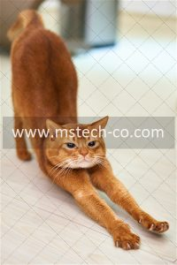 orange cat stretching on white surface photo