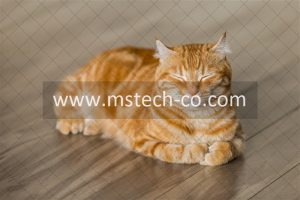 orange tabby cat on brown parquet floor photo