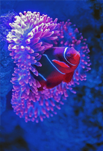 red fish beside pink coral photo
