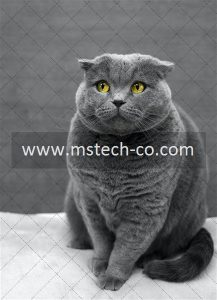 selective focus photography of Russian Blue cat photo