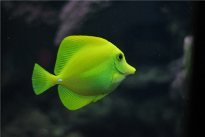 shallow focus photo of green fish photo