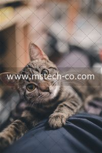 shallow focus photography of brown tabby cat photo