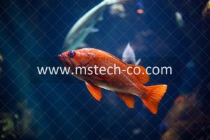 underwater photography of red fish photo