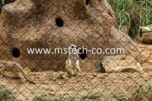 white and brown meerkat standing besides rock with holes photo