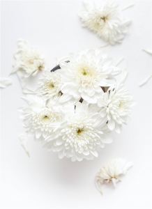 white petaled flower on white background photo
