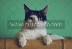 black and white cat lying on brown bamboo chair inside room photo