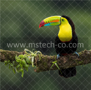 black and yellow bird on branch photo