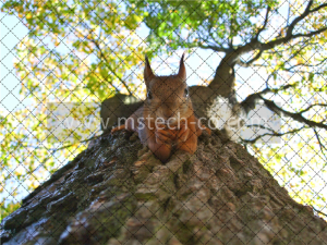 brown squirrel on green leafed tree photo