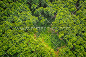 green and brown trees during daytime photo