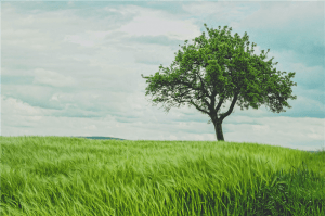 green tree on grassland during daytime photo