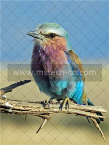 shallow focus photography of multi colored bird photo