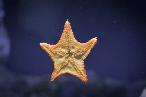 starfish on clear glass photo