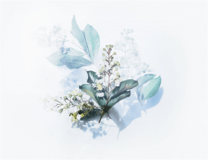 white flowering plant artwork photo