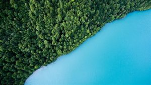 BIRD'S EYE VIEW PHOTOGRAPHY OF TREES AND BODY OF WATER PHOTO