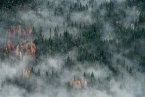 BIRD'S VIEW OF TALL TREES COVERED WITH SMOKES PHOTO NATURE